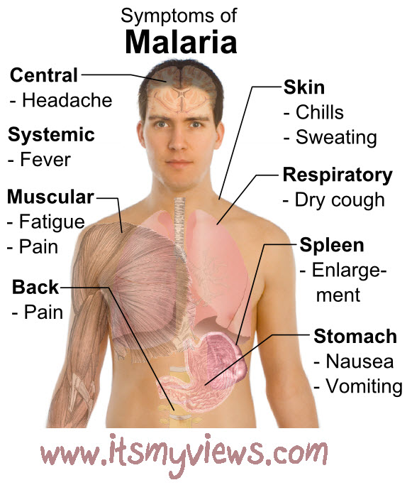 Malaria disease causes, Symptoms , prevention and treatment.