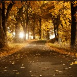 Latest Beautiful Natural Tree Wallpapers and Screensaver 2012