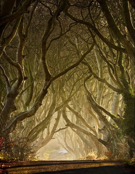 Wonders-of Nature-Enchanted Pathway photography
