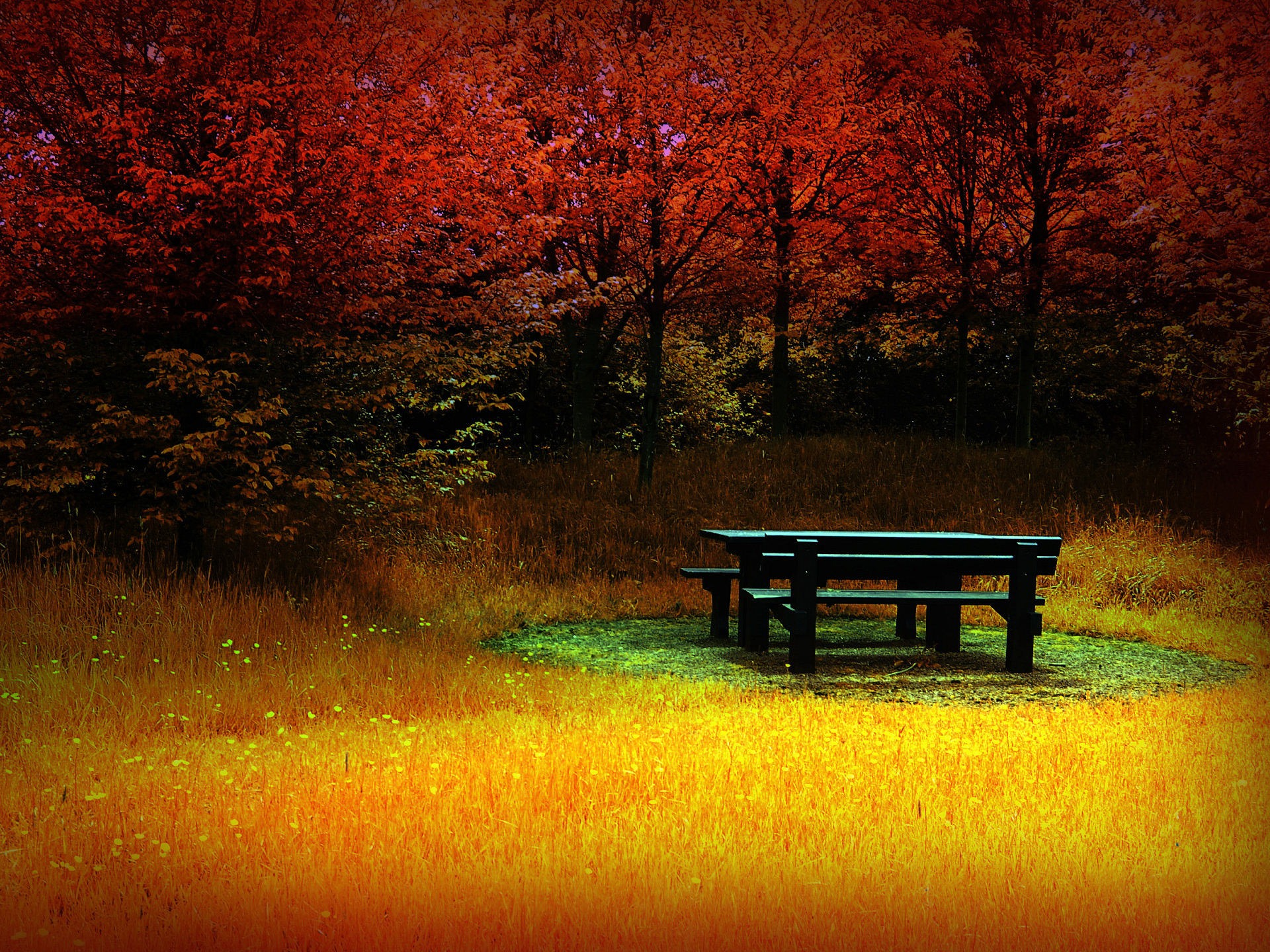 Autumn HD wallpaper - Autumn Wallpapers Collection