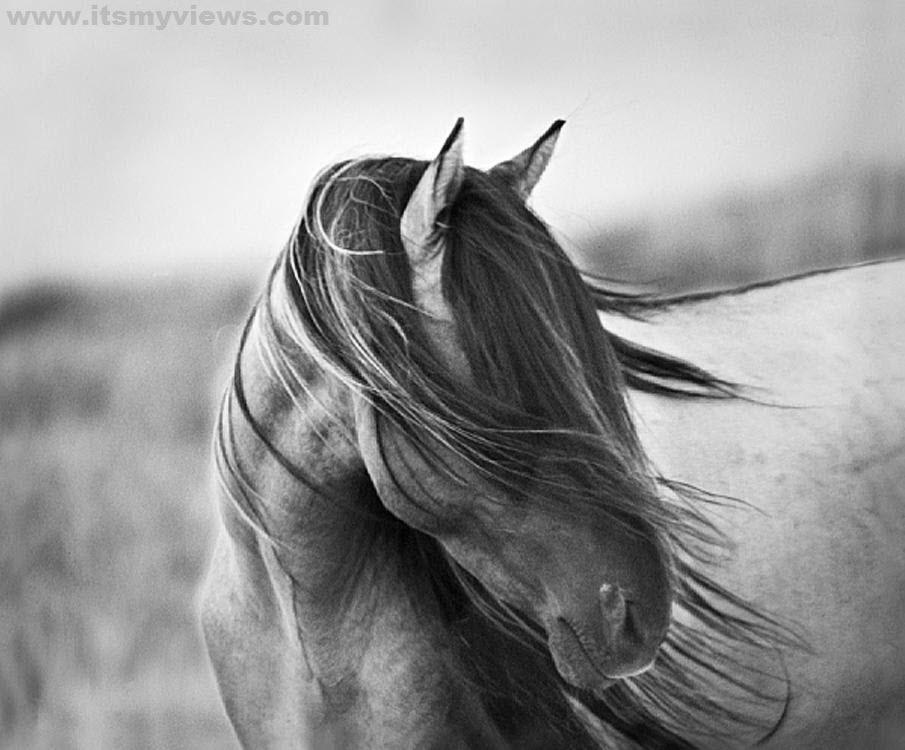 Horse wallpaper 2012