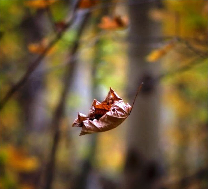 Dry-tree-leaf-wallpape...