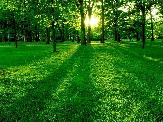Wallpaper Nature Beauty Green Is a beautiful green colorWallpaper Nature Beauty Green