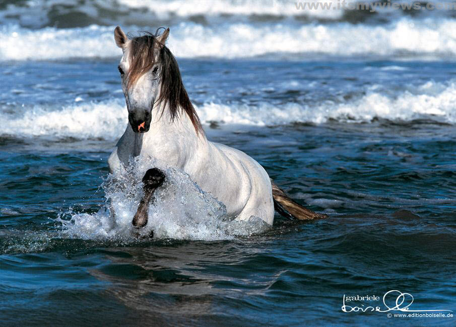 horse-desktop-wallpaper-2012