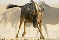 latest fastest animal list 2012