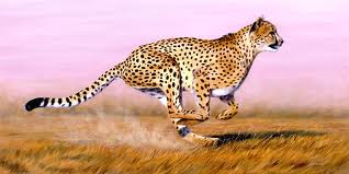 most fastest animal 2012