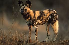 world fastest dog 2012