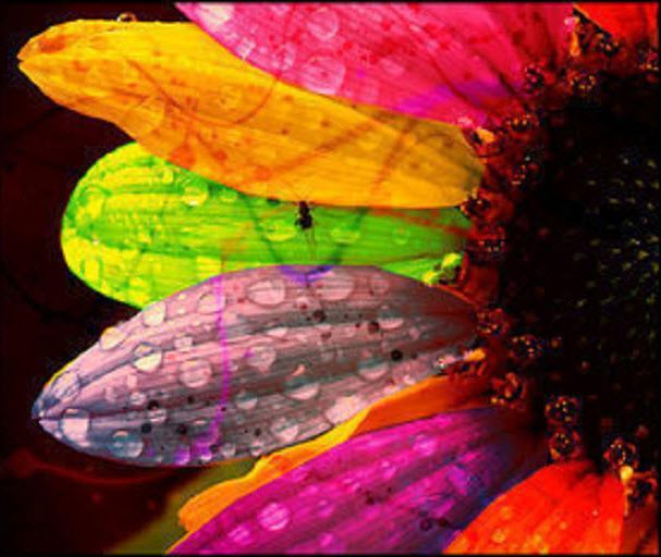Multicolor-flower-photography-backgrounds and wallpaper