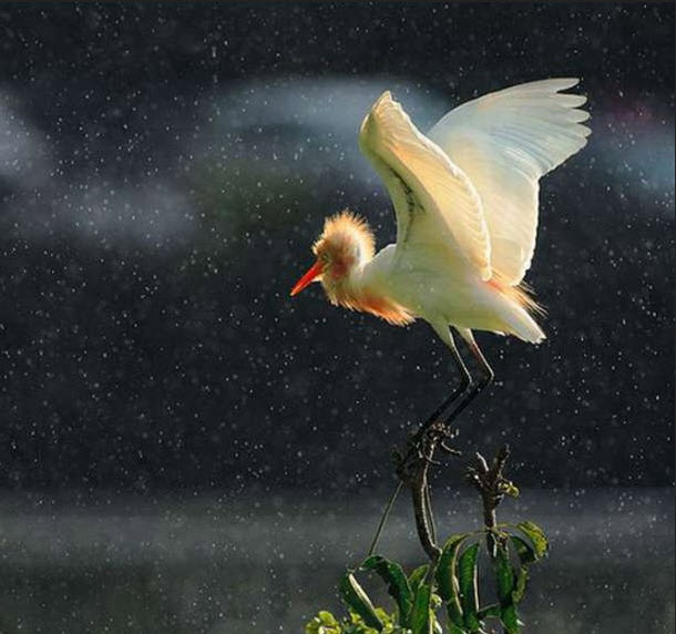 bird-photography-in-rain-beautiful-bird-picture-in-rain