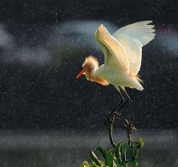 bird-photography-in-rain-beautiful-bird-picture-in-rain