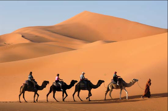 United-arab-emirates-desert-and-camel-photography-and-latest-picture-2012