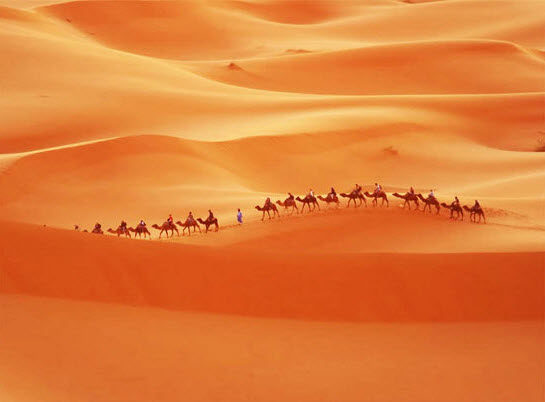 beautiful-desert-photography-and-picture-of-camel-in-desert