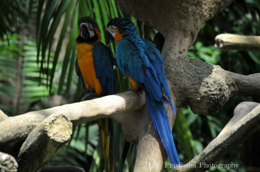 beautiful-parrot-HD-widescreen-wallpapers-2013
