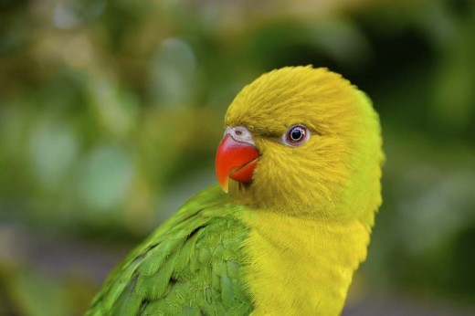 coloful-beautiful-parrot-birds-for-kids-wallpaper