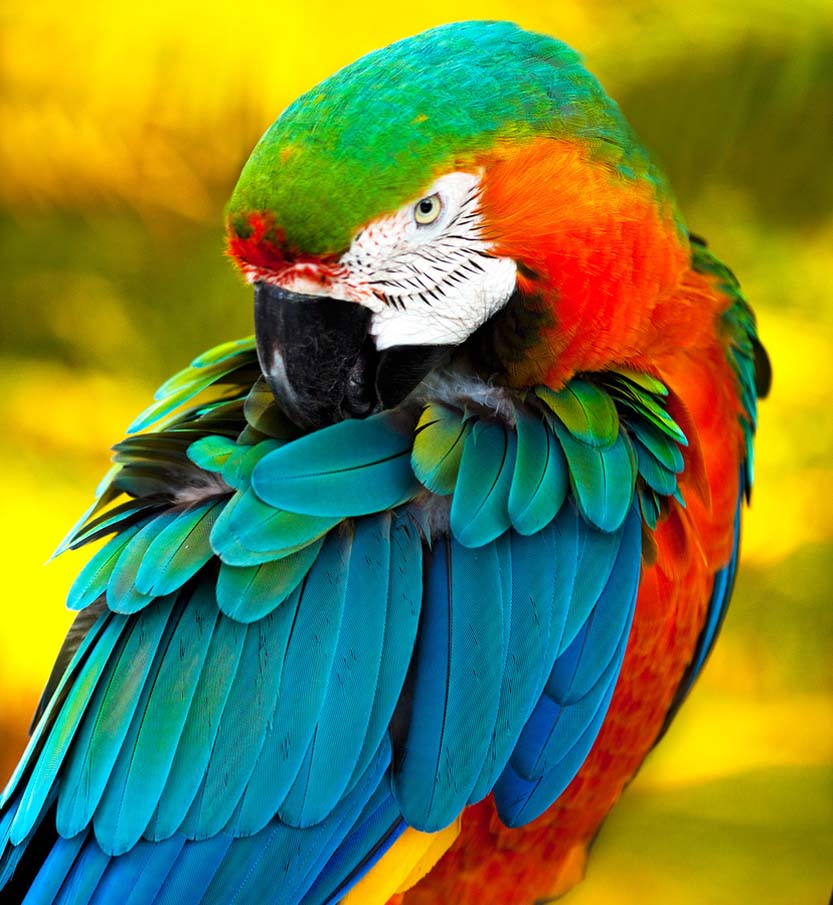 colorful-birds-wallpaper-high-definations-widescreen-backgrounds-desktop-pc