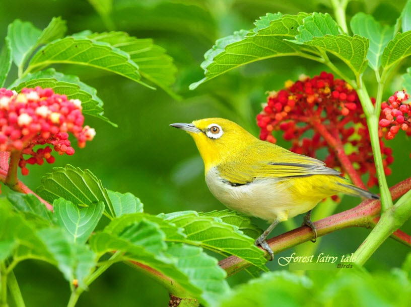 colorful-most-beautiful-bird-latest-pictures-wallpaper