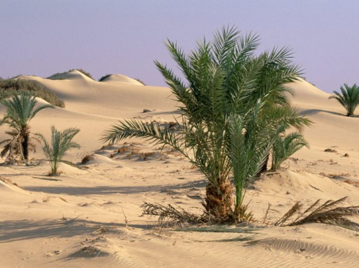greenary-photography-in-desert-wallpaper