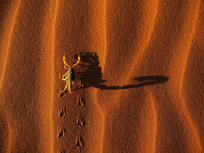 scorpio-in-desert-wide-screen-wallpaper-and-screen-saver