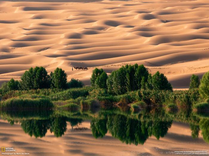 world-most-popular-dry-desert-wallpaper-of-camel
