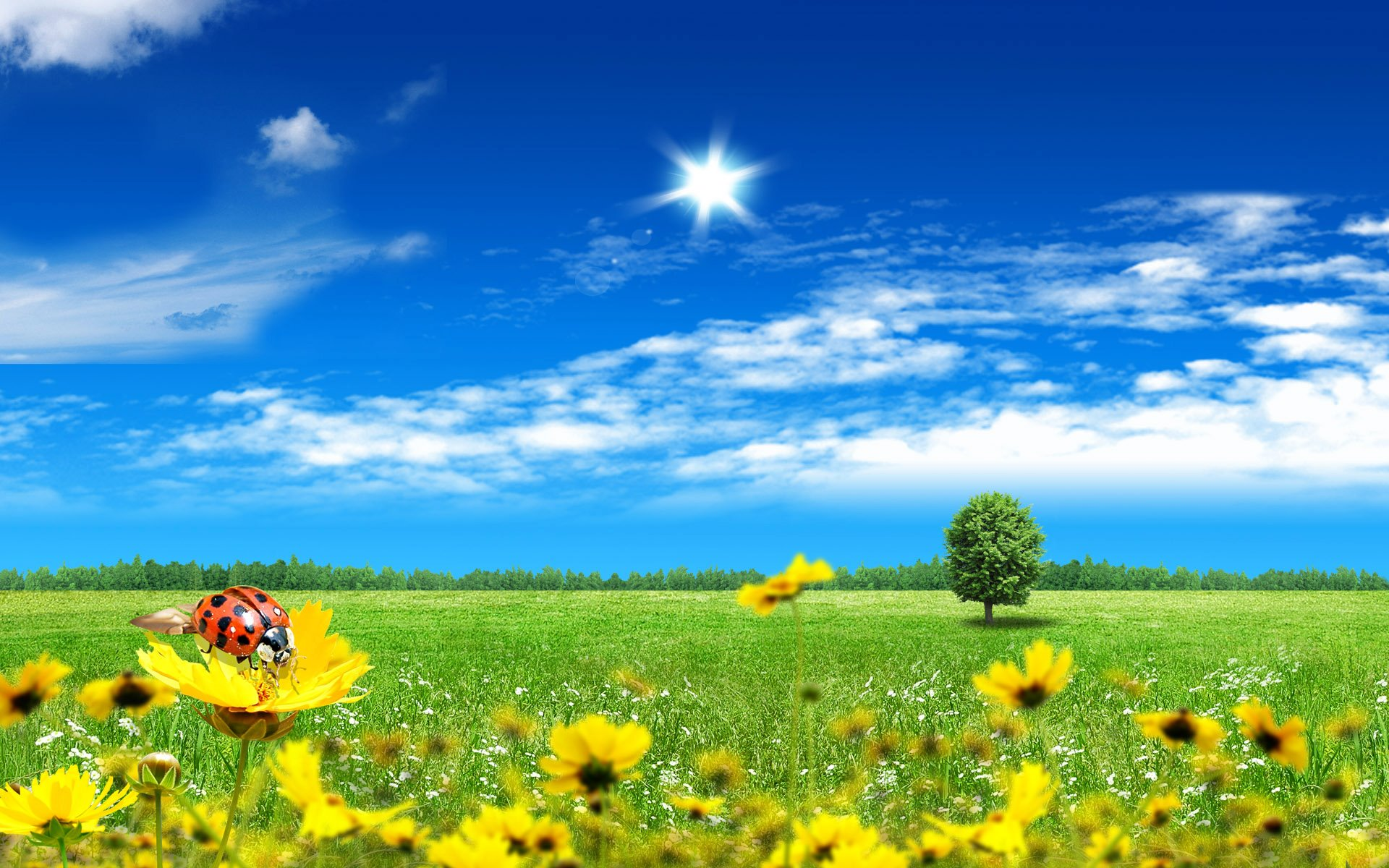 latest-sunflower-colorful-pictures-and-wallpapers