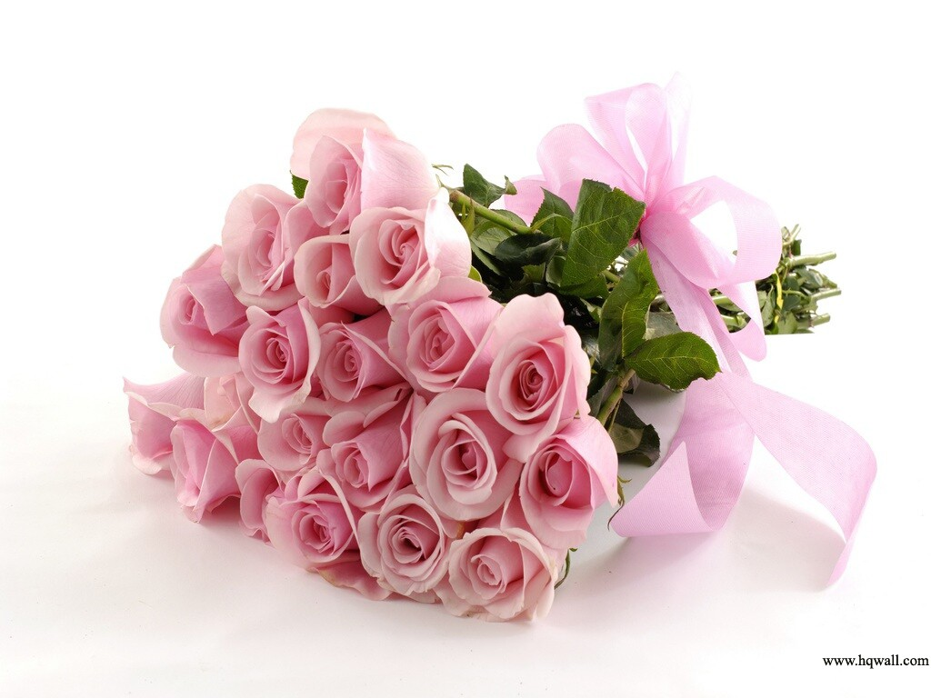 Beautiful Flowers HD Wallpapers pink color rose background desktop pc mobile - For Zindagi Sis