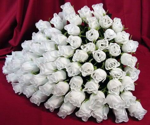 beautiful-white-color-rose-wallpaper-2012-2013