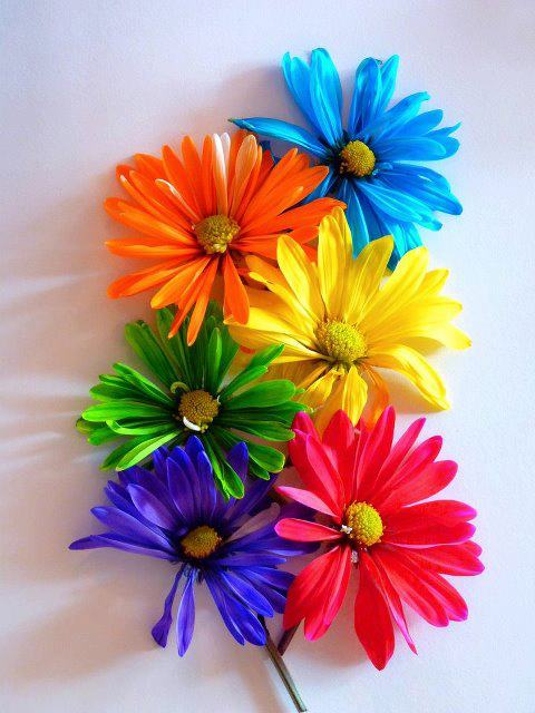 colorful-flower-background-picture-wallpaper-2012-2013
