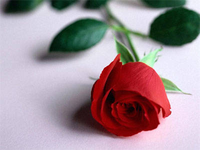 happy-romantic-red-rose-wallpaper-share-at-facebook-with-friends