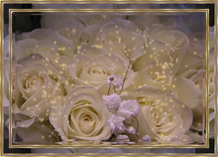 white-rose-background-for-photo-album-at-wedding