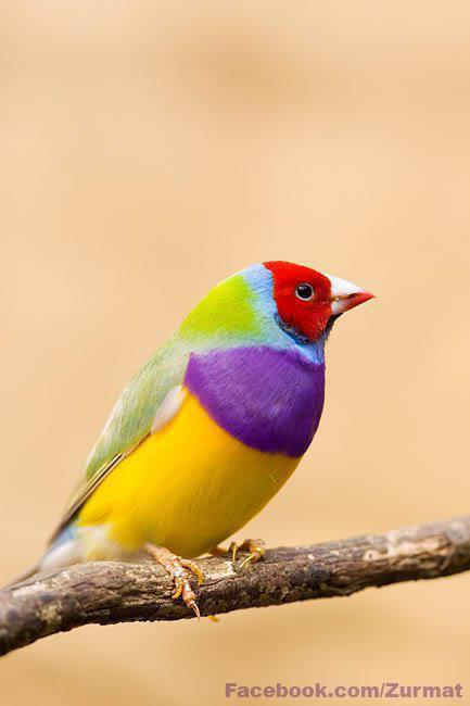 world-most-colorful-bird-picture-wallpaper-2012-2013