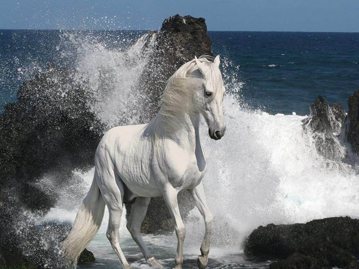 world-most-beautiful-Horse-HD-widescreen-wallpaper-2012-2013