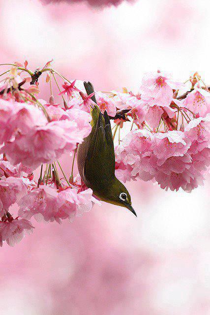 most-beautiful-bird-sparrow-2013-picture-widescreen-desktop-mobile-wallpaper-2013
