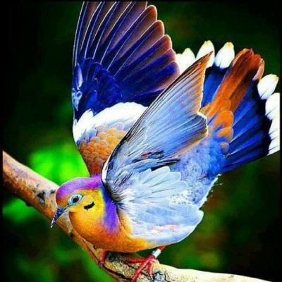 most-beautiful-colorful-bird-2013-photography-picture