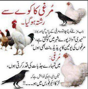 good urdu joke at bird murgi and kawa urdu joke