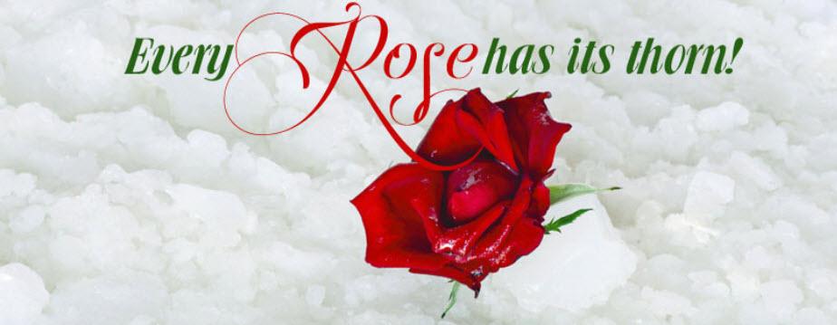 Best Rose Quotes. QuotesGram