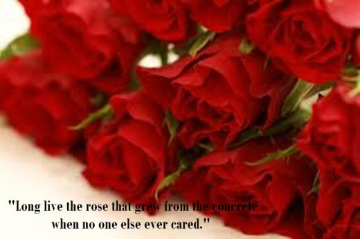 amazing-rose-flower-wallpapers- with-love-quote-2013-2014