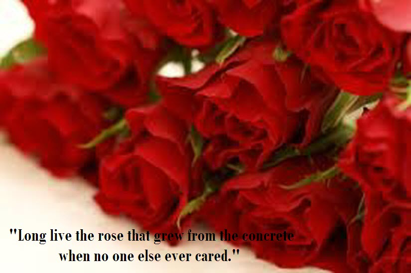 Latest Most Beautiful Red Rose Pictures With Romantic Love Quotes 2016