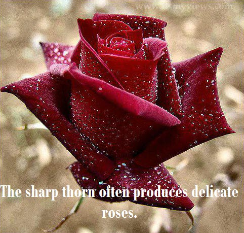 beautiful-red-rose-with-water-drops quotes picture -2013