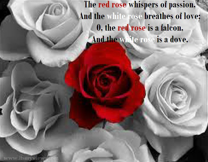 latest-romantic-rose-flower-wallpapers-with-love-quote-2013-2014.jpg