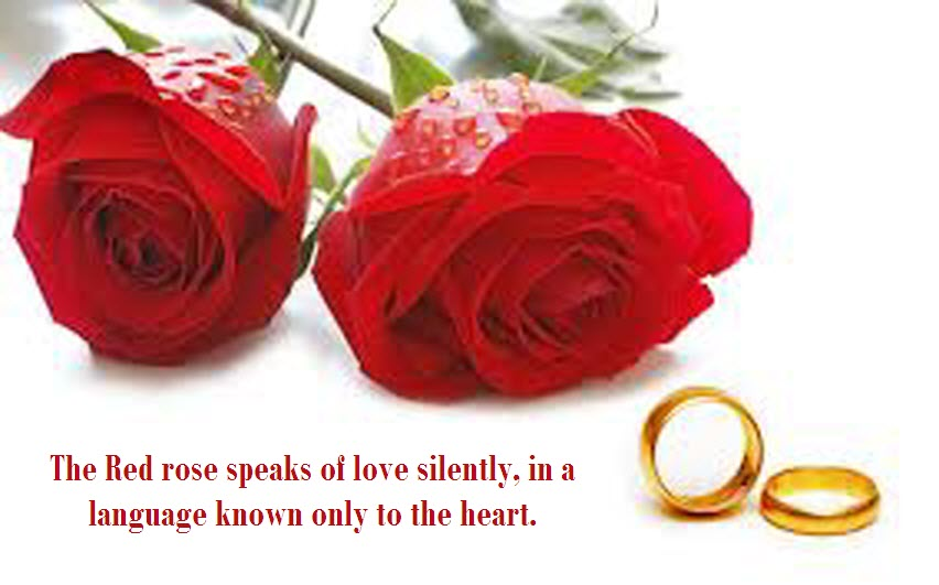 Latest Most Beautiful Red Rose Pictures With Romantic Love Quotes Awesome Love Images With Quotes On Flowers
