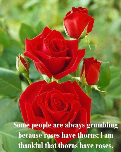 romantic-red-rose-with-dew-drops-picture with quotes-2013 2014