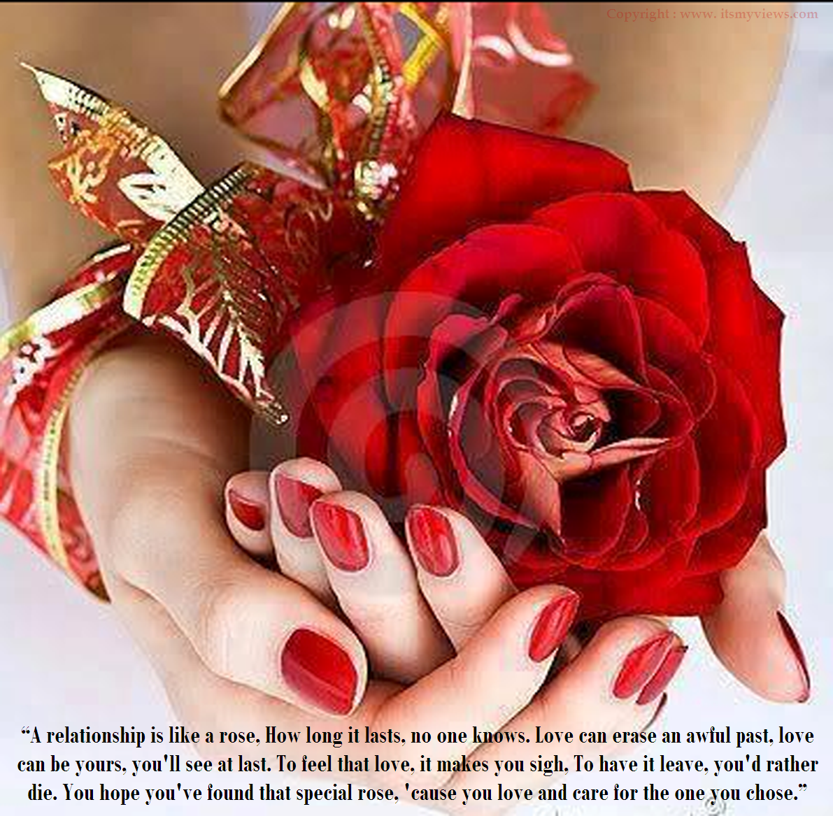 Latest Most Beautiful Red Rose with Romantic Love Quotes 2016